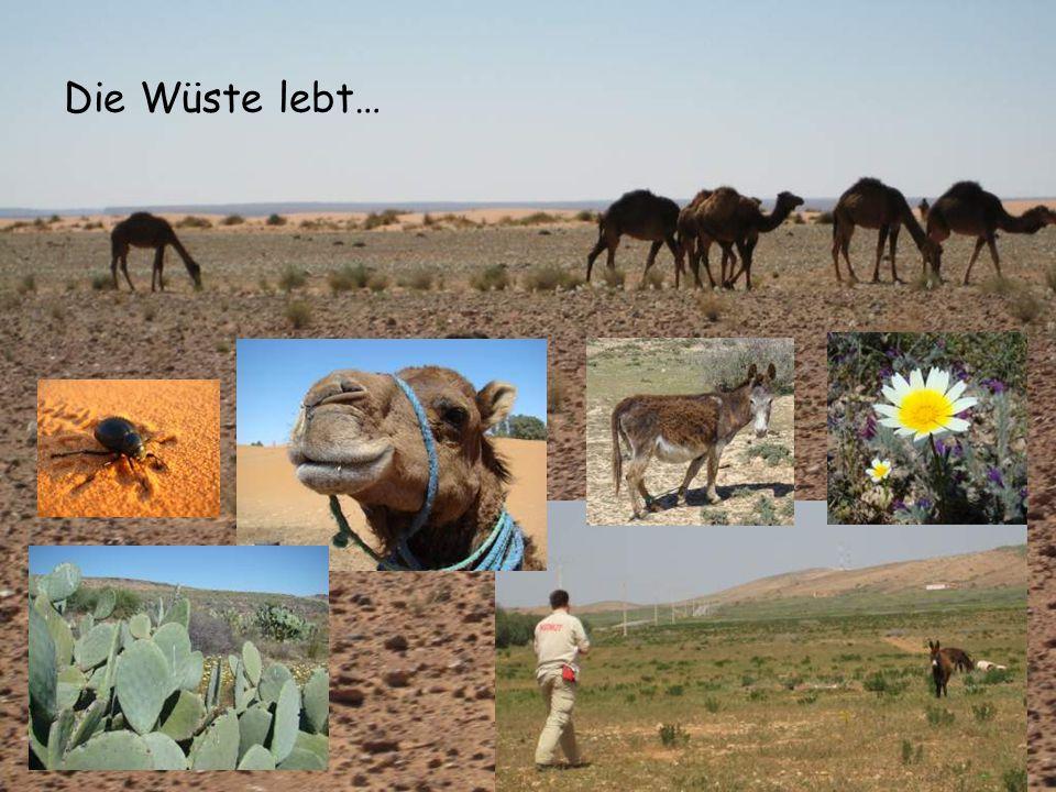 Die Wüste lebt…