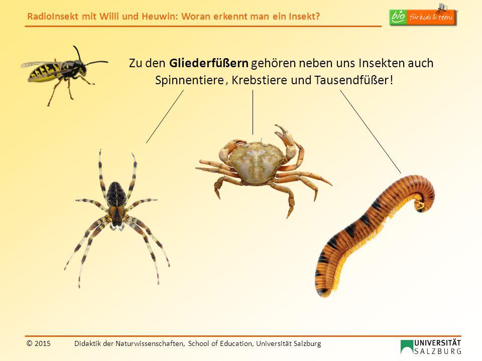 RadioInsekt mit Willi und Heuwin: Woran erkennt man ein Insekt? © 2015Didaktik der Naturwissenschaften, School of Education, Universität Salzburg Zu d