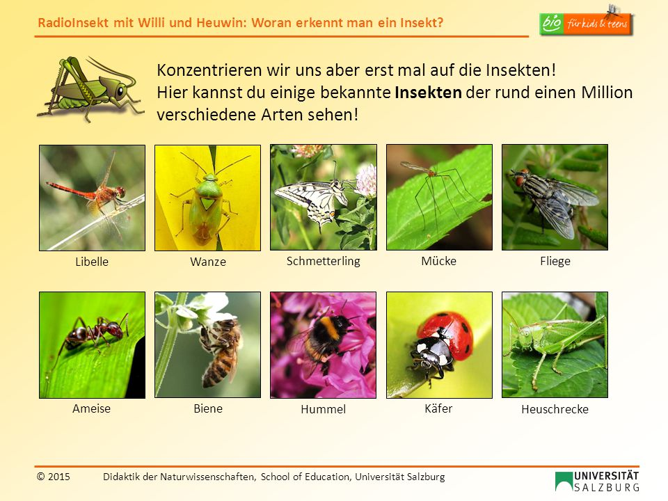 RadioInsekt mit Willi und Heuwin: Woran erkennt man ein Insekt? © 2015Didaktik der Naturwissenschaften, School of Education, Universität Salzburg Konz