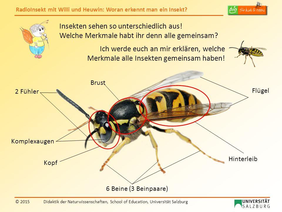 RadioInsekt mit Willi und Heuwin: Woran erkennt man ein Insekt? © 2015Didaktik der Naturwissenschaften, School of Education, Universität Salzburg Inse