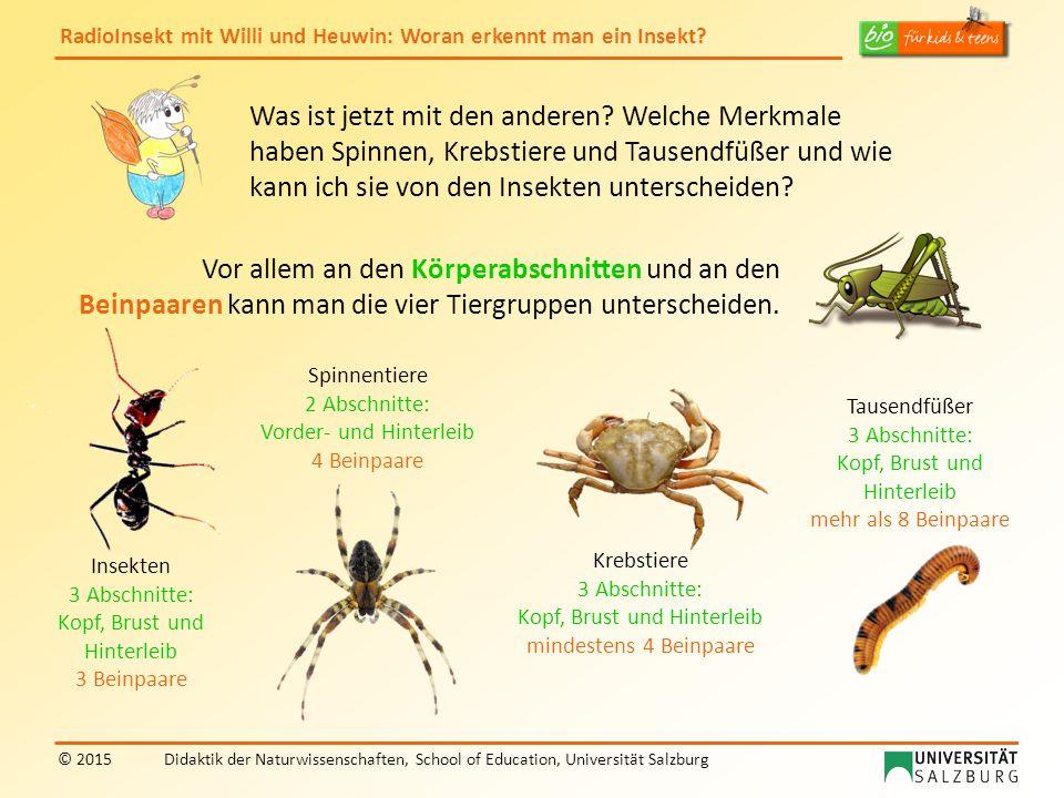 RadioInsekt mit Willi und Heuwin: Woran erkennt man ein Insekt? © 2015Didaktik der Naturwissenschaften, School of Education, Universität Salzburg Was