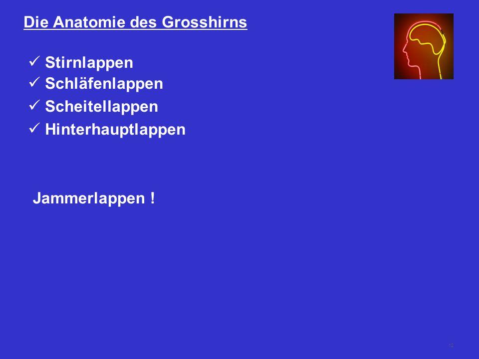 12 Die Anatomie des Grosshirns Stirnlappen Schläfenlappen Scheitellappen Hinterhauptlappen Jammerlappen !