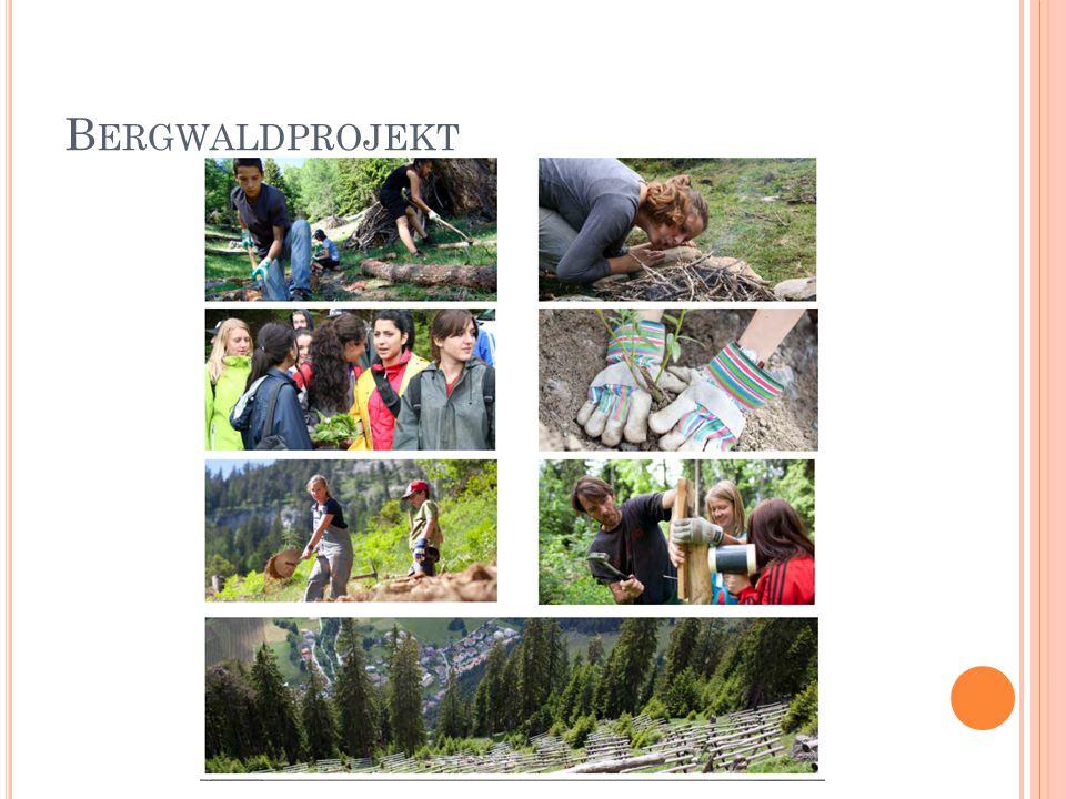 """Durch sinnvolle, realistische Waldarbeit wird das sensible Ökosystem Bergwald, aber auch die nachhaltige Nutzung der natürlichen Ressource """"Wald begreiflich gemacht."""