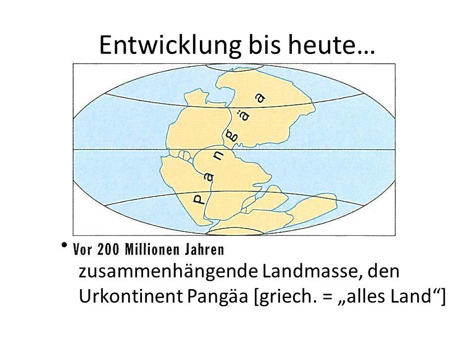 """Entwicklung bis heute… Sämtliche Kontinente bilden eine zusammenhängende Landmasse, den Urkontinent Pangäa [griech. = """"alles Land""""]"""