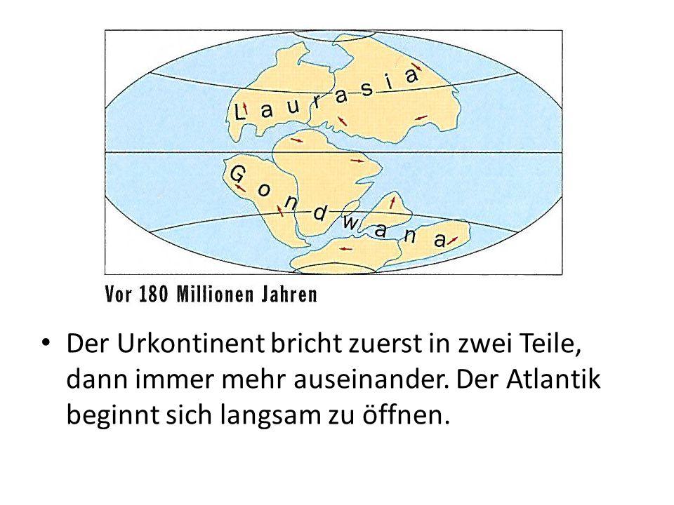 Der Urkontinent bricht zuerst in zwei Teile, dann immer mehr auseinander. Der Atlantik beginnt sich langsam zu öffnen.