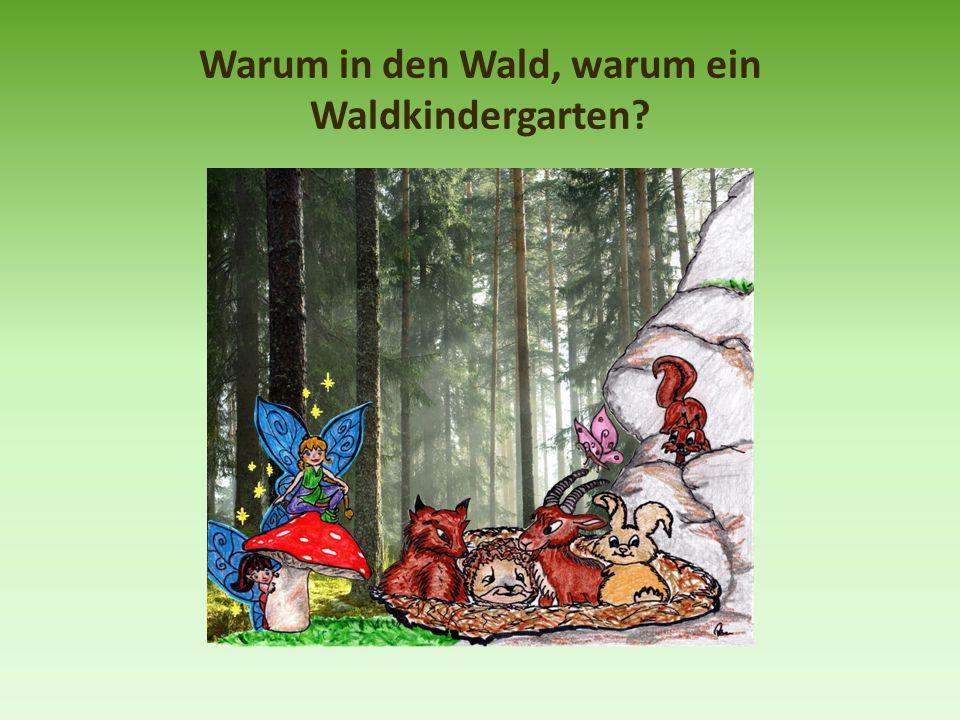 Warum in den Wald, warum ein Waldkindergarten?