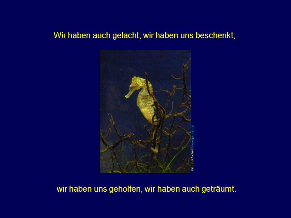 Wir haben uns gefreut, wir haben auch das Leid gesehen. Wir haben auch geweint, wir haben uns bereichert. © Bernd Boscolo www.pixelio.dewww.pixelio.de