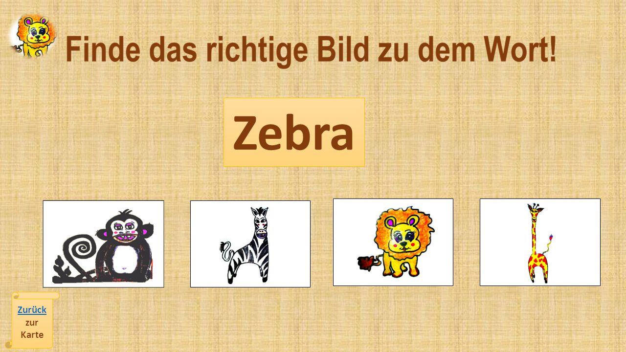 Zebra Zurück zur Karte