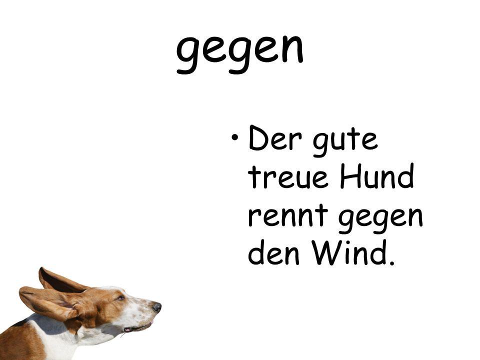 gegen Der gute treue Hund rennt gegen den Wind.