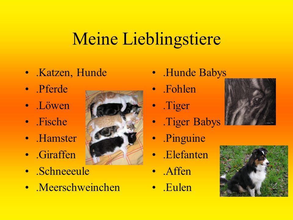 Meine Lieblingstiere.Katzen, Hunde.Pferde.Löwen.Fische.Hamster.Giraffen.Schneeeule.Meerschweinchen.Hunde Babys.Fohlen.Tiger.Tiger Babys.Pinguine.Elefanten.Affen.Eulen