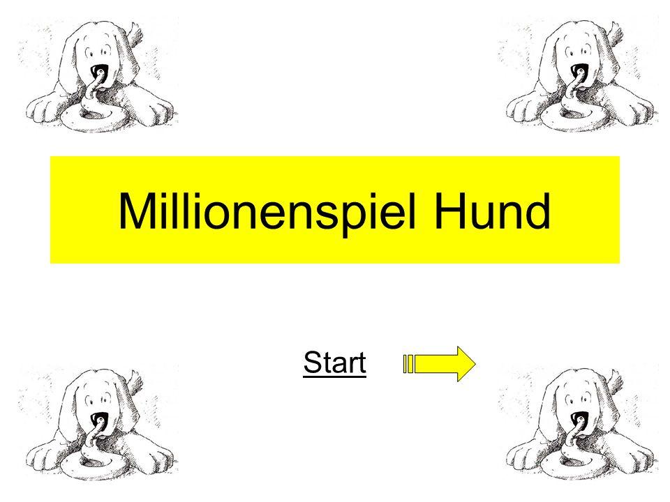 Millionenspiel Hund Start
