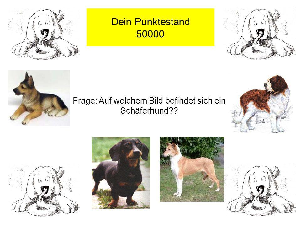 Dein Punktestand 50000 Frage: Auf welchem Bild befindet sich ein Schäferhund??