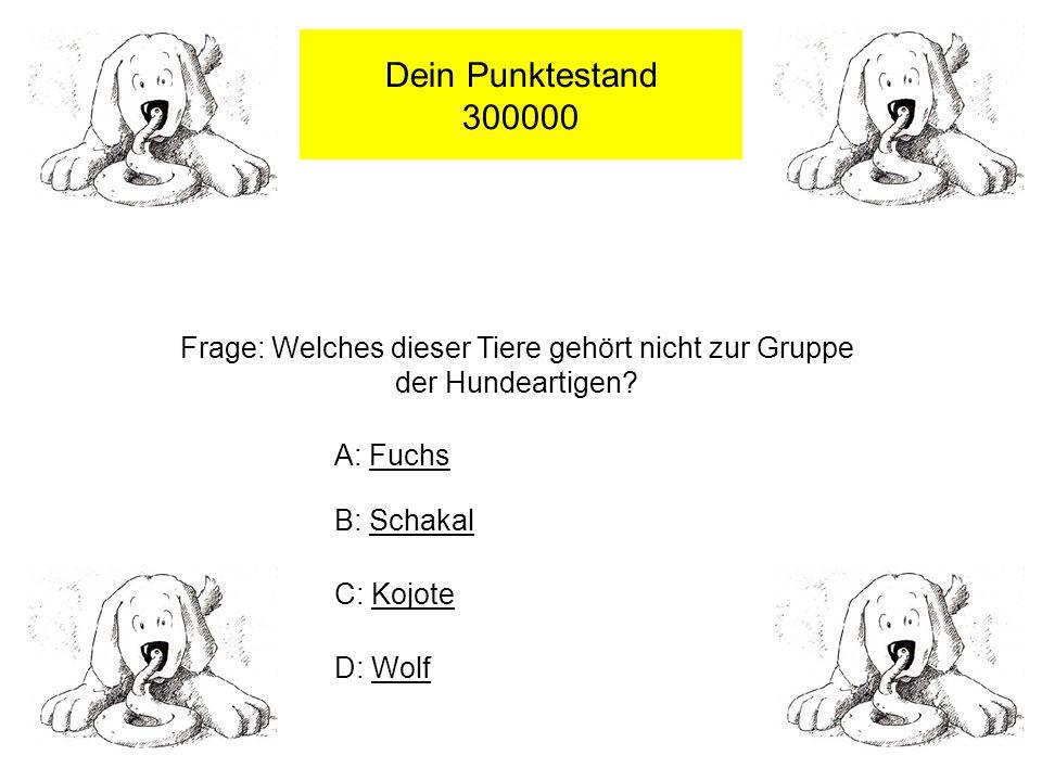 Dein Punktestand 100000 Frage: Von welchem Tier stammt Hund ab .