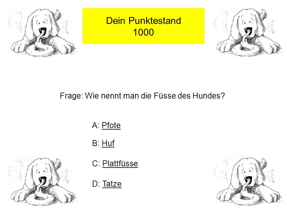 Dein Punktestand 1000 Frage: Wie nennt man die Füsse des Hundes.