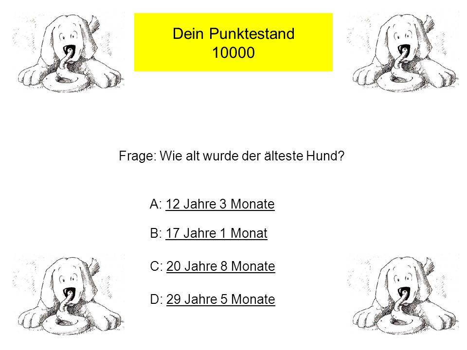 Dein Punktestand 10000 Frage: Wie alt wurde der älteste Hund.