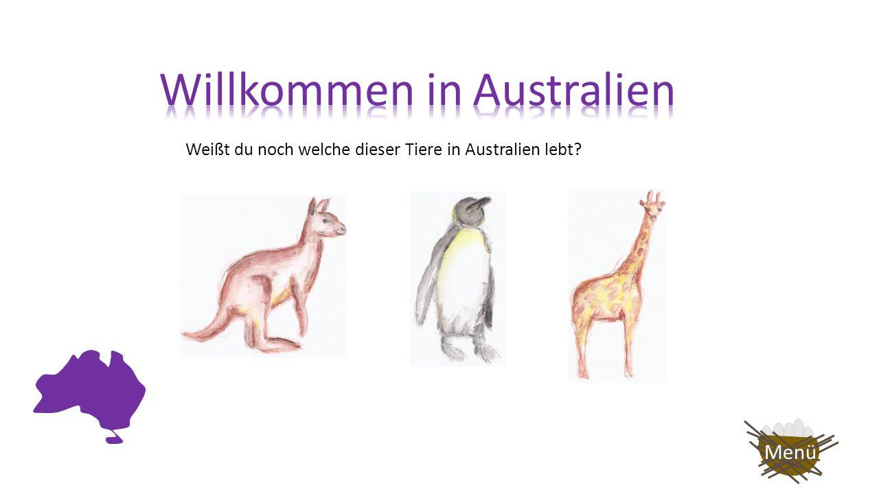 Dieses Tier lebt in Australien.