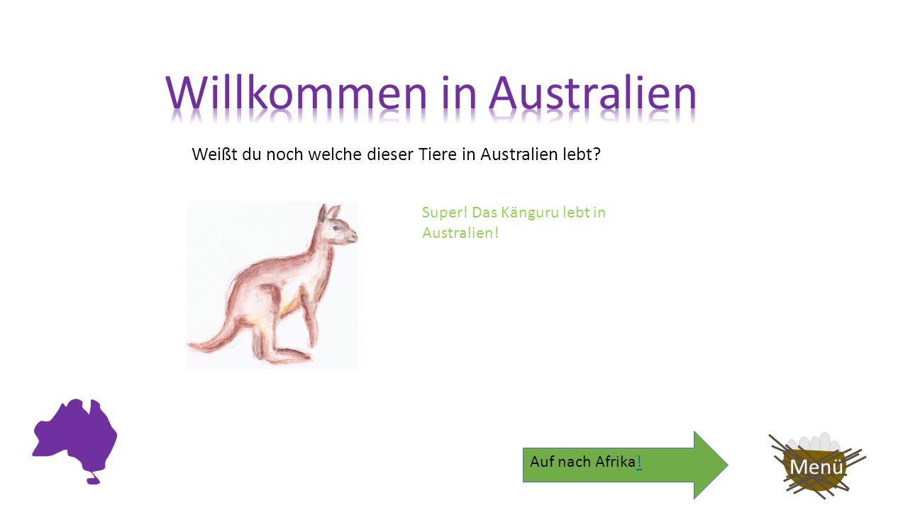 Weißt du noch welche dieser Tiere in Australien lebt? Menü