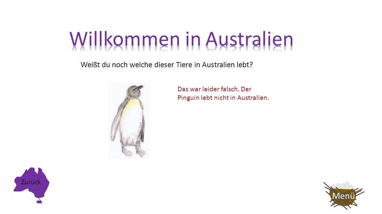 Weißt du noch welche dieser Tiere in Australien lebt? Super! Das Känguru lebt in Australien! Auf nach Afrika! Menü
