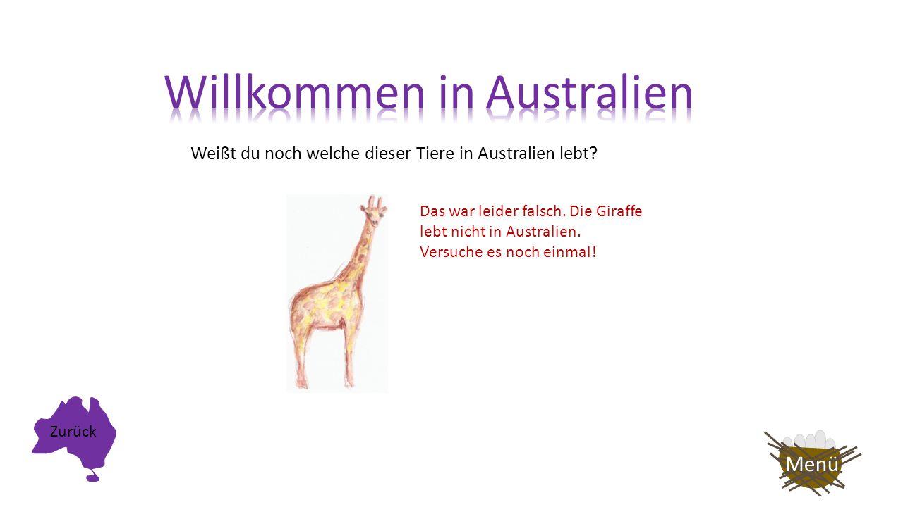 Weißt du noch welche dieser Tiere in Australien lebt? Das war leider falsch. Der Pinguin lebt nicht in Australien. Zurück Menü