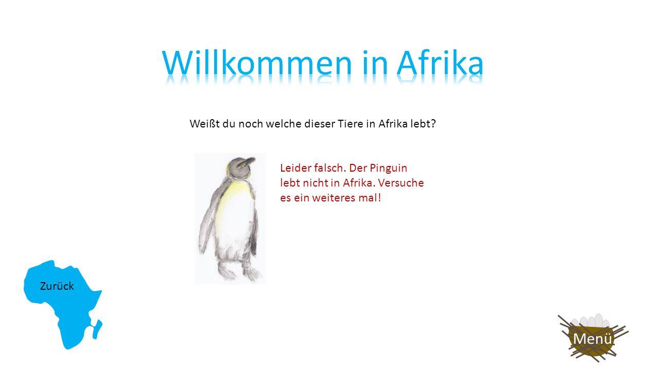 Weißt du noch welche dieser Tiere in Afrika lebt? Auf nach Asien! Super! Die Giraffe lebt in Afrika! Weiter so!! Menü