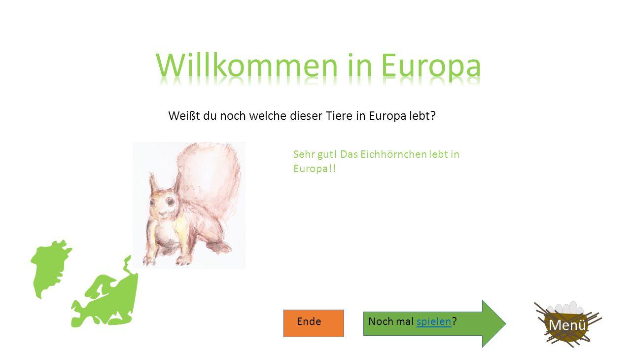 Weißt du noch welche dieser Tiere in Europa lebt? Menü