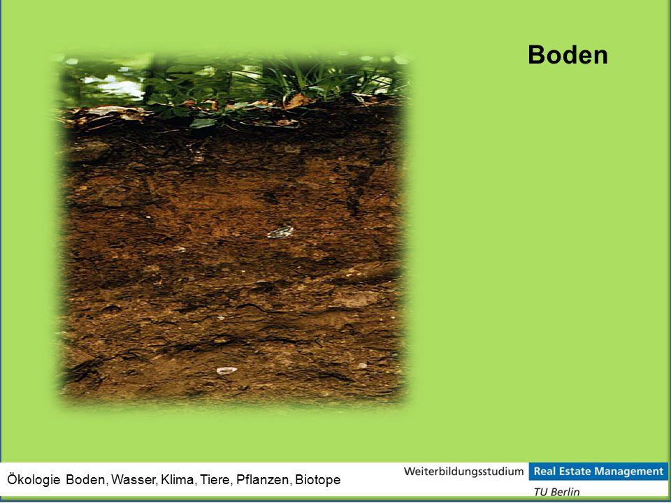 Ökologie Boden, Wasser, Klima, Tiere, Pflanzen, Biotope Boden