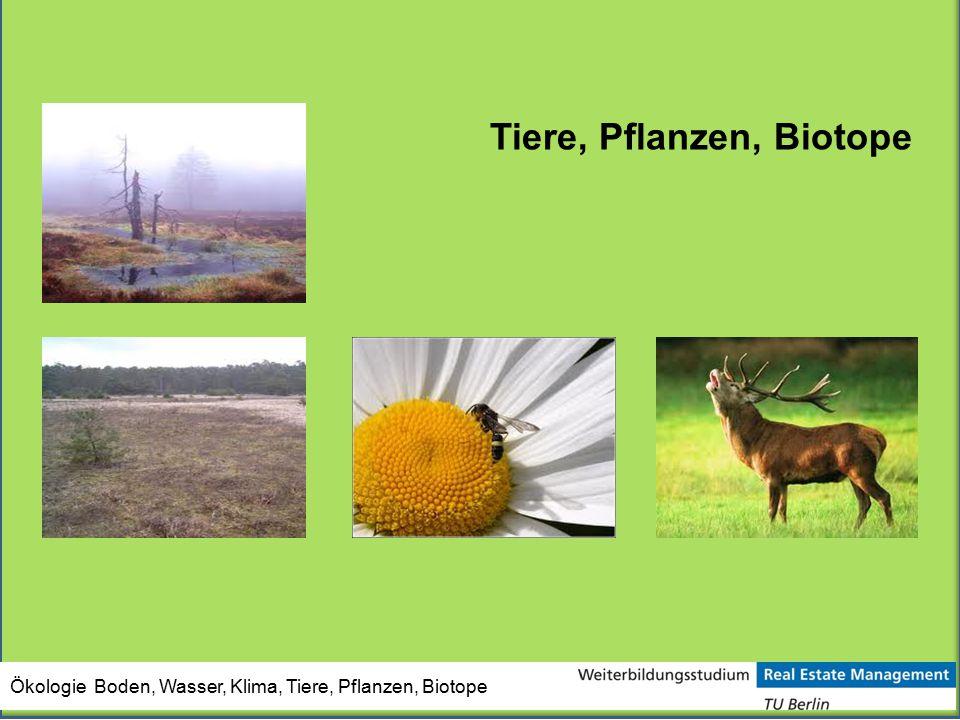 Ökologie Boden, Wasser, Klima, Tiere, Pflanzen, Biotope Tiere, Pflanzen, Biotope