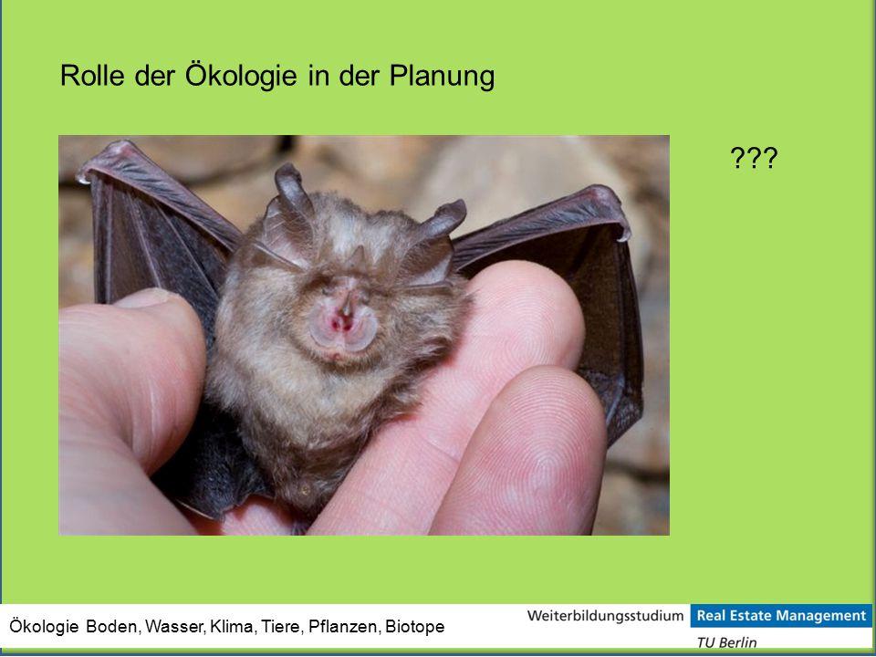 Ökologie Boden, Wasser, Klima, Tiere, Pflanzen, Biotope Rolle der Ökologie in der Planung ???