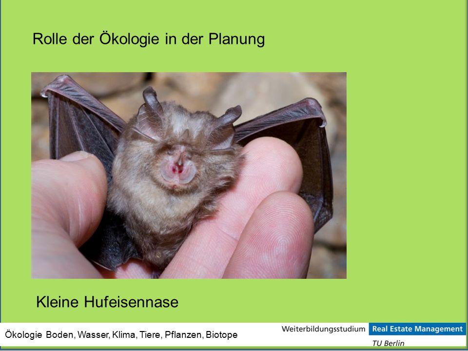 Ökologie Boden, Wasser, Klima, Tiere, Pflanzen, Biotope Rolle der Ökologie in der Planung Kleine Hufeisennase