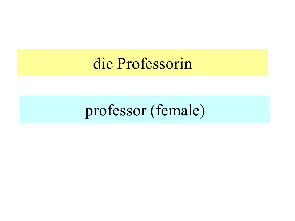 der Professor professor (male)