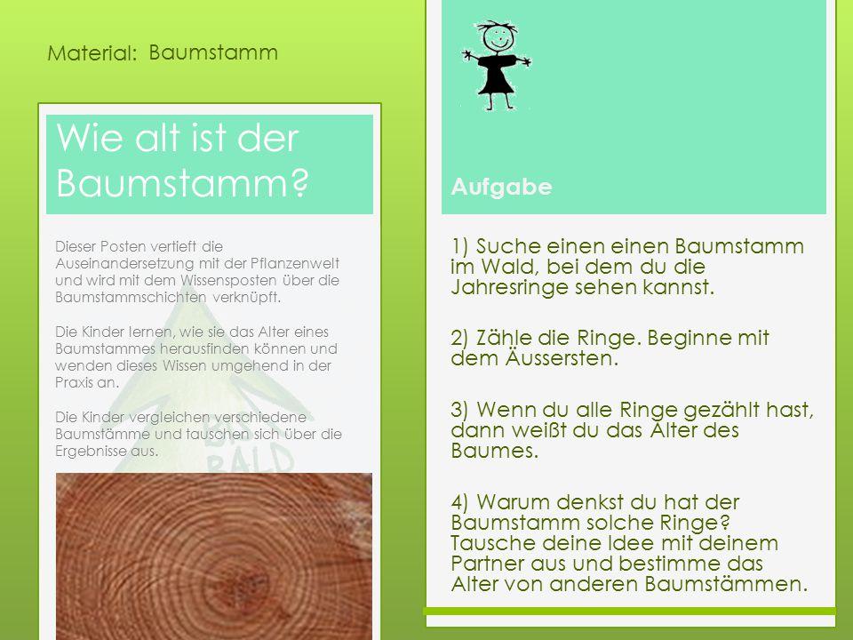 Aufgabe Material: Wie alt ist der Baumstamm? 1) Suche einen einen Baumstamm im Wald, bei dem du die Jahresringe sehen kannst. 2) Zähle die Ringe. Begi