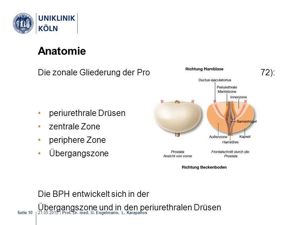 21.05.2015 | Prof. Dr. med. U. Engelmann, L. Karapanos Seite 10 Anatomie Die zonale Gliederung der Prostata enthält nach McNeal (1972): periurethrale