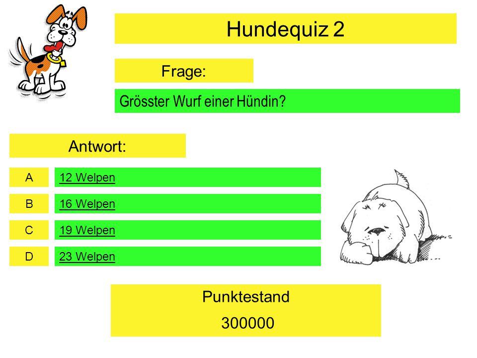 A B C D Punktestand Grösster Wurf einer Hündin? 19 Welpen 23 Welpen 300000 16 Welpen 12 Welpen Hundequiz 2 Frage: Antwort: