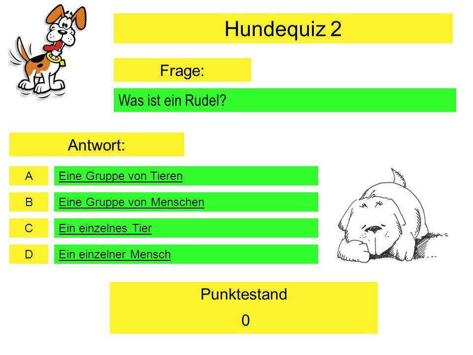 A B C D Punktestand Was ist ein Rudel? Eine Gruppe von Tieren Eine Gruppe von Menschen Ein einzelnes Tier Ein einzelner Mensch 0 Hundequiz 2 Frage: An