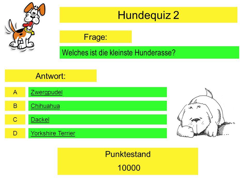 A B C D Punktestand Welches ist die kleinste Hunderasse? Zwergpudel Dackel Yorkshire Terrier 10000 Chihuahua Hundequiz 2 Frage: Antwort: