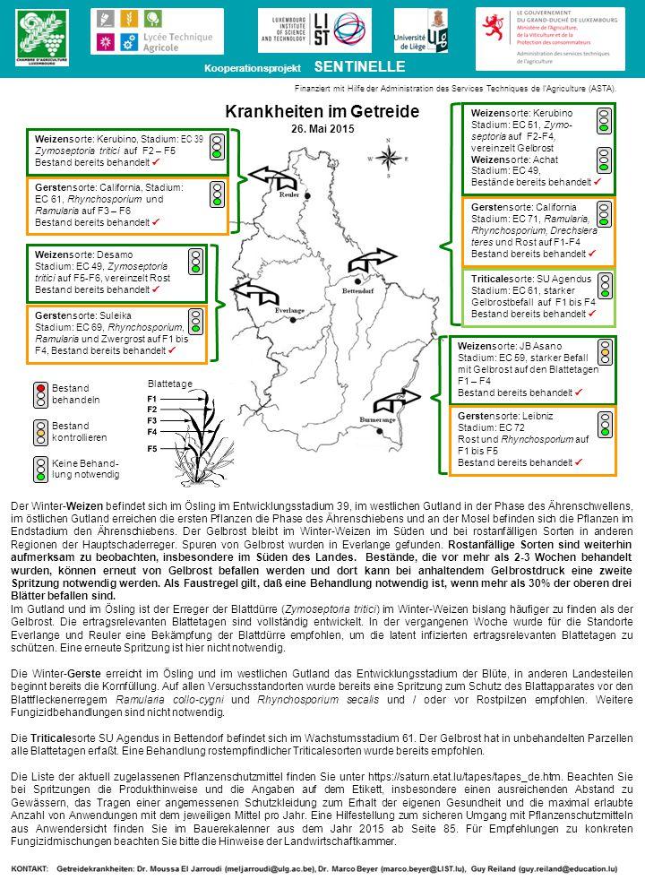 Der Winter-Weizen befindet sich im Ösling im Entwicklungsstadium 39, im westlichen Gutland in der Phase des Ährenschwellens, im östlichen Gutland erreichen die ersten Pflanzen die Phase des Ährenschiebens und an der Mosel befinden sich die Pflanzen im Endstadium den Ährenschiebens.