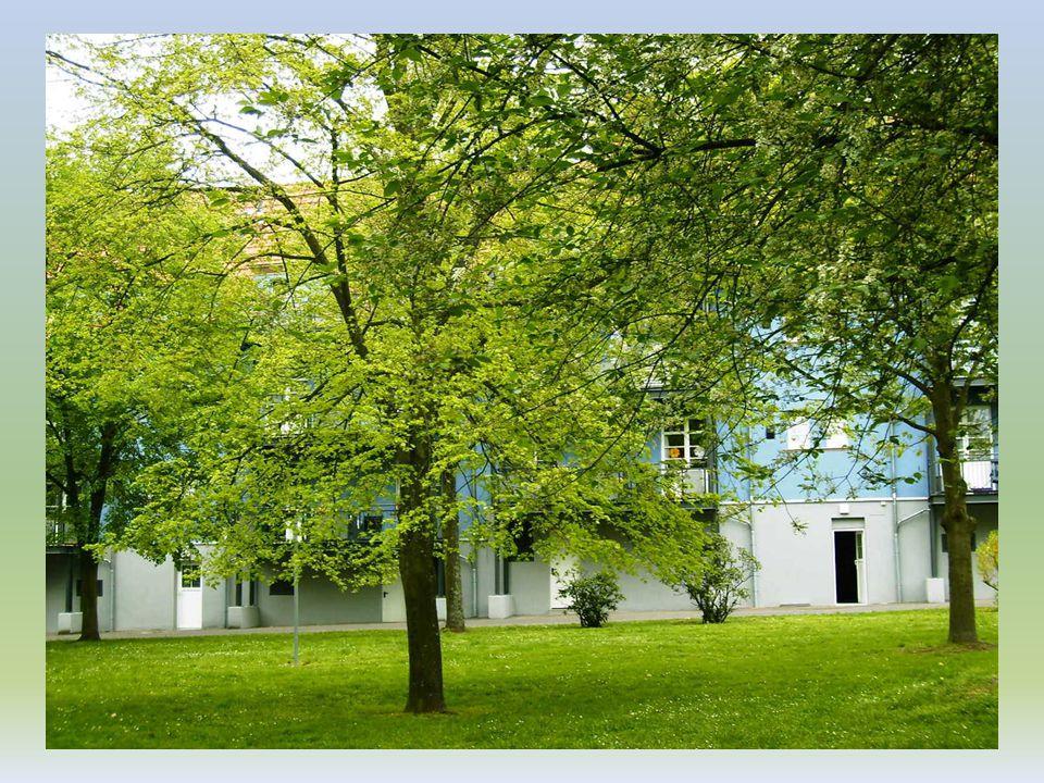 Hallo Baum In deinen kleinen, jungen Zweigen sitzt ein Vogelpaar und singt. Mit deinen zarten, grünen Blättern spielt sacht und still der Abendwind. S