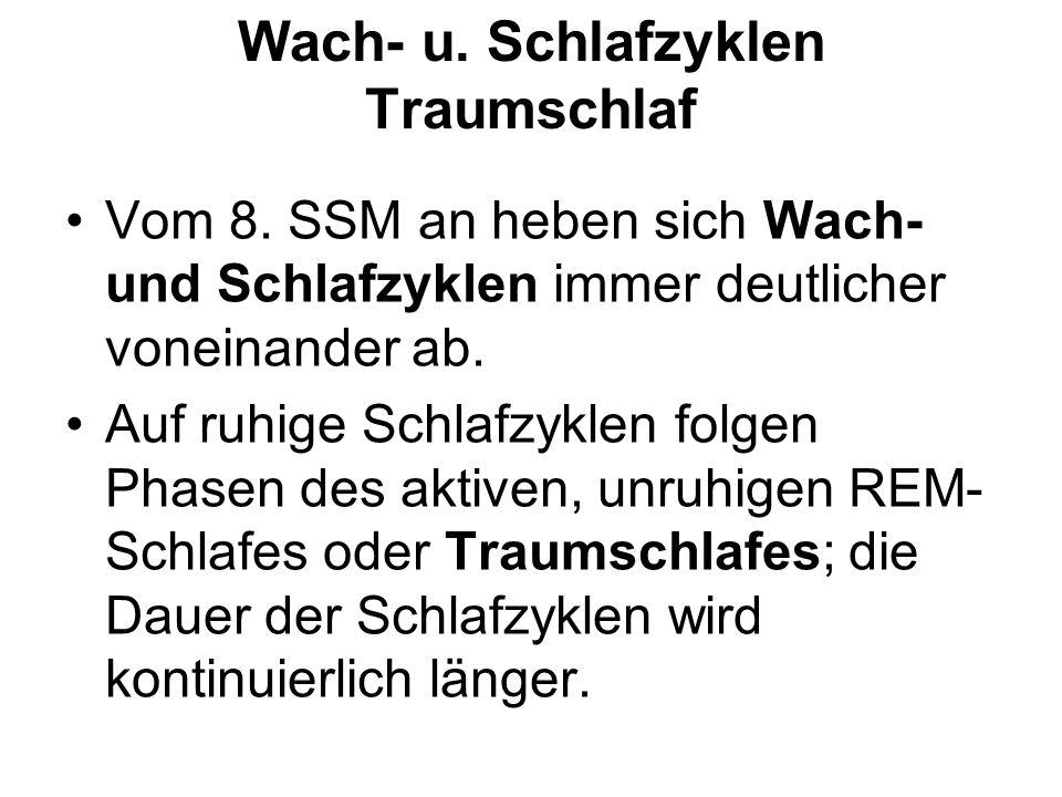 Wach- u.Schlafzyklen Traumschlaf Vom 8.