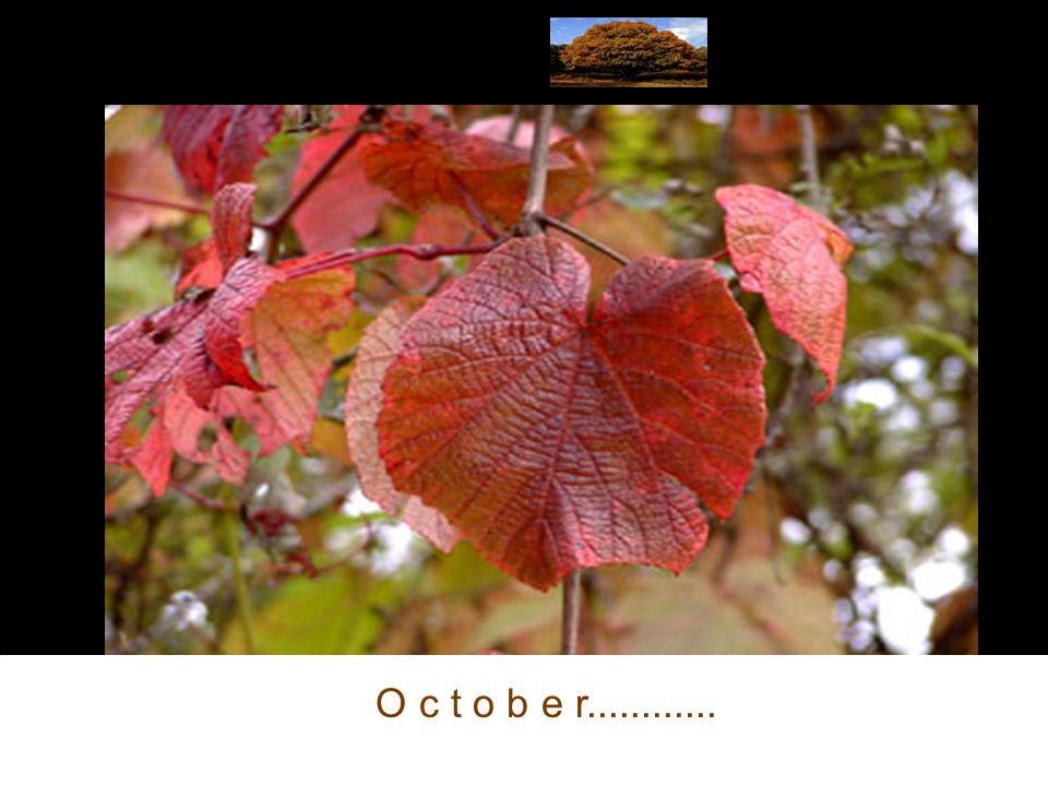 Profitez Vos propres Saisons...Enjoy Your own Seasons...