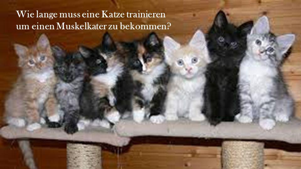 Wie lange muss eine Katze trainieren um einen Muskelkater zu bekommen?