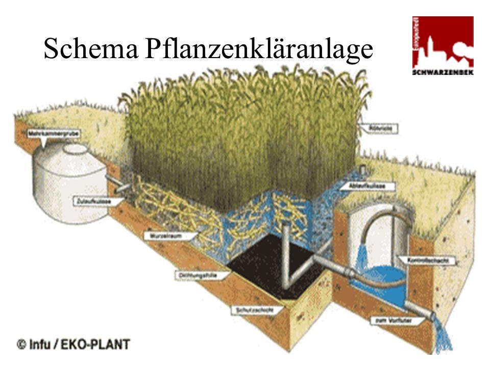Schema Pflanzenkläranlage