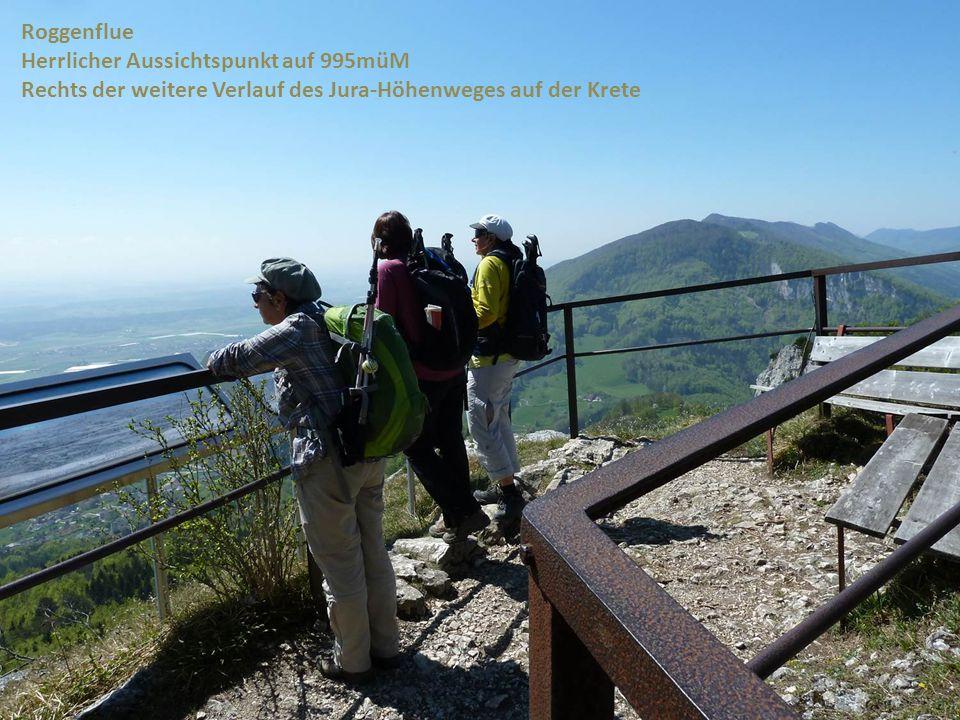 Roggenflue Herrlicher Aussichtspunkt auf 995müM Rechts der weitere Verlauf des Jura-Höhenweges auf der Krete