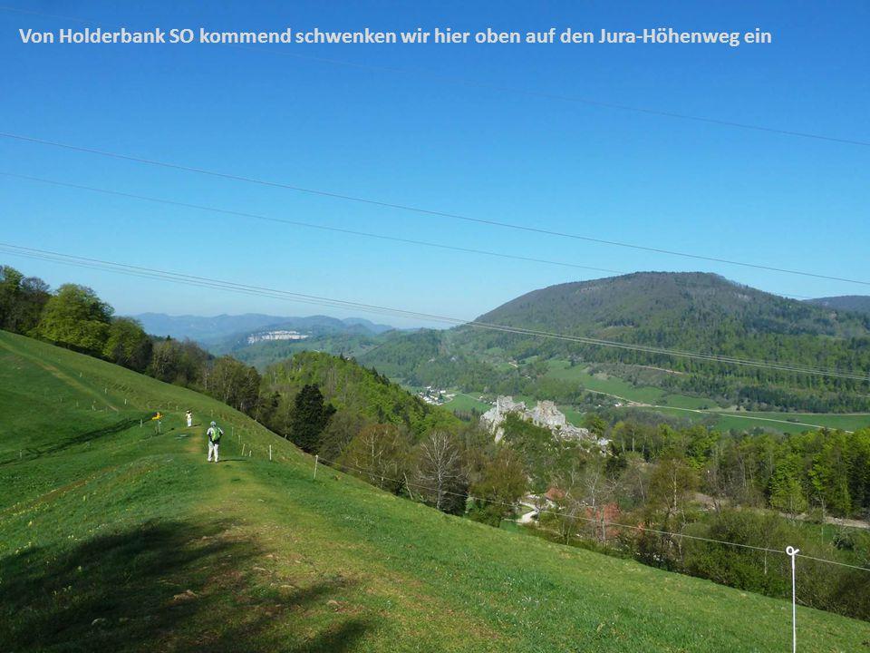 Von Holderbank SO kommend schwenken wir hier oben auf den Jura-Höhenweg ein