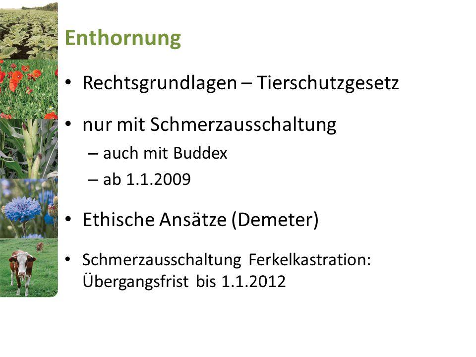 Enthornung Rechtsgrundlagen – Tierschutzgesetz nur mit Schmerzausschaltung – auch mit Buddex – ab 1.1.2009 Ethische Ansätze (Demeter) Schmerzausschalt