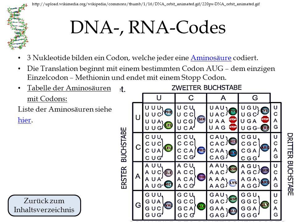 http://upload.wikimedia.org/wikipedia/commons/thumb/1/16/DNA_orbit_animated.gif/220px-DNA_orbit_animated.gif Transkription der DNA DNA Transkription 1.