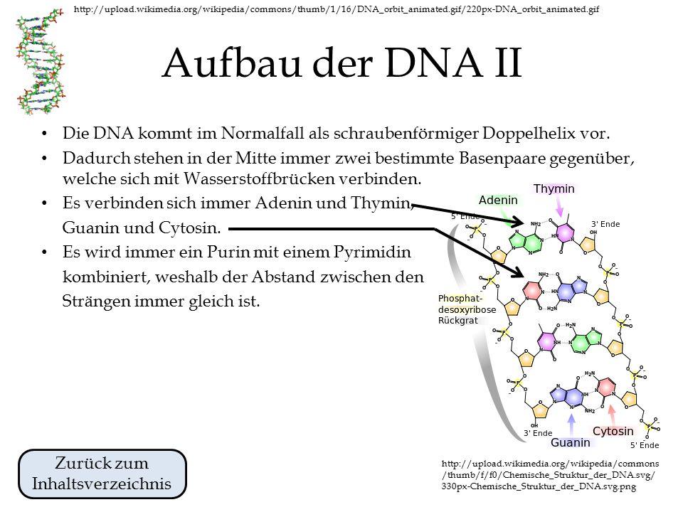 http://upload.wikimedia.org/wikipedia/commons/thumb/1/16/DNA_orbit_animated.gif/220px-DNA_orbit_animated.gif Aufbau der DNA I Die DNA ist ein Polymer, welches aus vielen Nukleotiden (Bausteinen) aufgebaut ist.