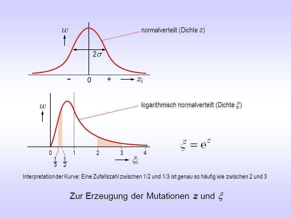 w 0 22 + zizi 0 1 w ii Zur Erzeugung der Mutationen z und  23 4 1 2 1 3 Interpretation der Kurve: Eine Zufallszahl zwischen 1/2 und 1/3 ist genau