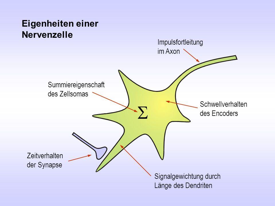 Eigenheiten einer Nervenzelle Schwellverhalten des Encoders Impulsfortleitung im Axon Zeitverhalten der Synapse  Summiereigenschaft des Zellsomas Sig