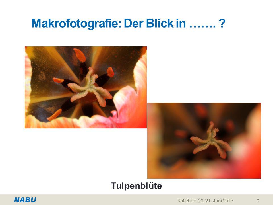 Makrofotografie: Der Blick in ……. ? Kaltehofe 20./21. Juni 20153 Tulpenblüte