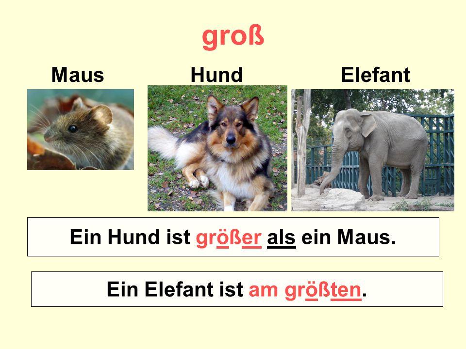 groß Maus Hund Elefant Wer ist größer – ein Maus oder ein Hund? Wer ist am größten? Ein Hund ist größer als ein Maus. Ein Elefant ist am größten.
